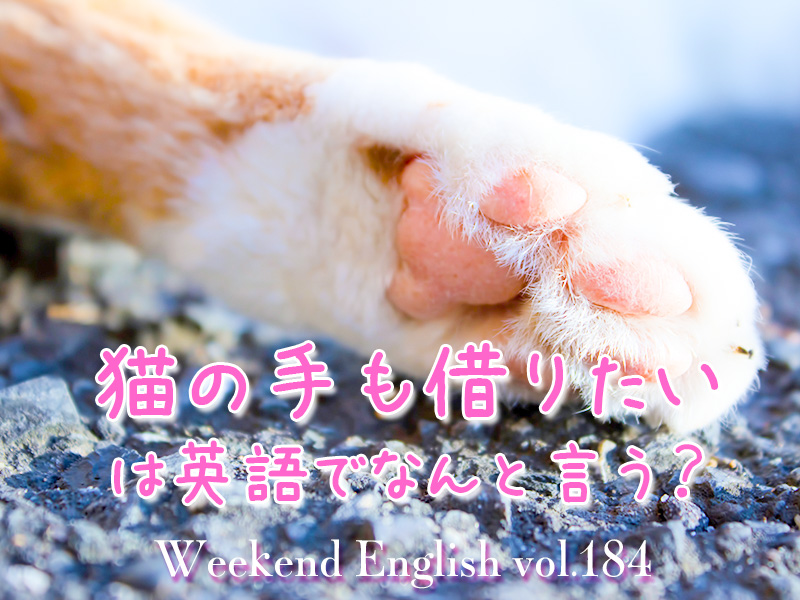 週末英語(weekend english)猫の手も借りたい