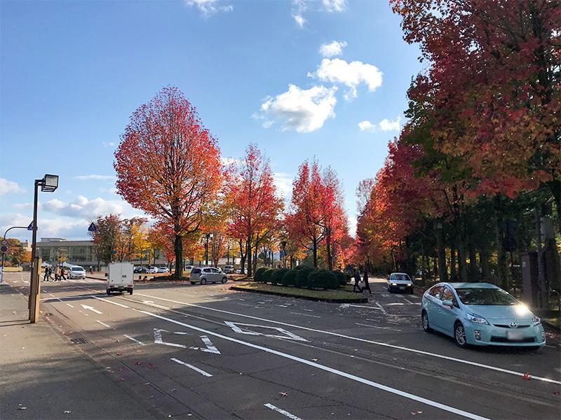 金沢アメリカ楓通り