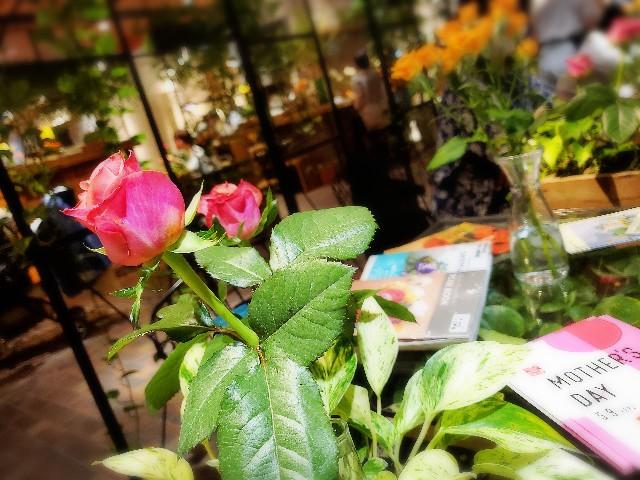 f:id:m-himemiko-rainbowmaterial9999:20210411100815j:image