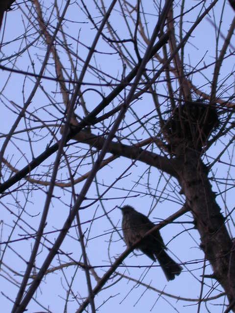冬 巣の画像