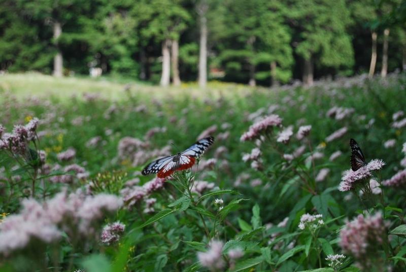 旅 蝶 の画像