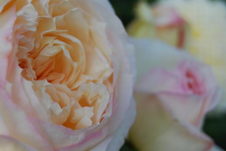 馨 苑の画像