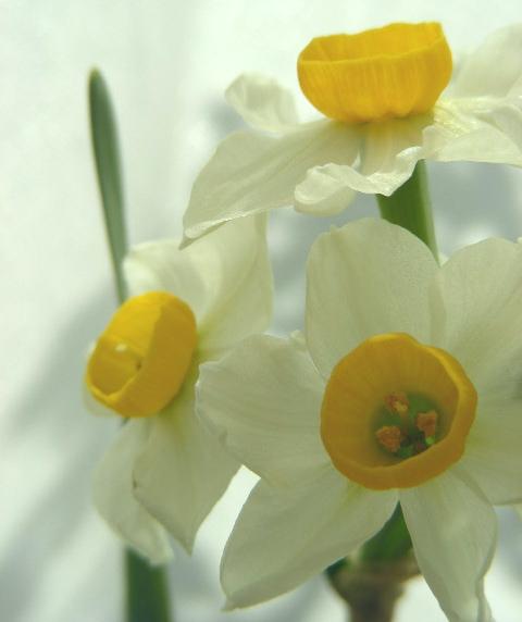 摘 草の画像
