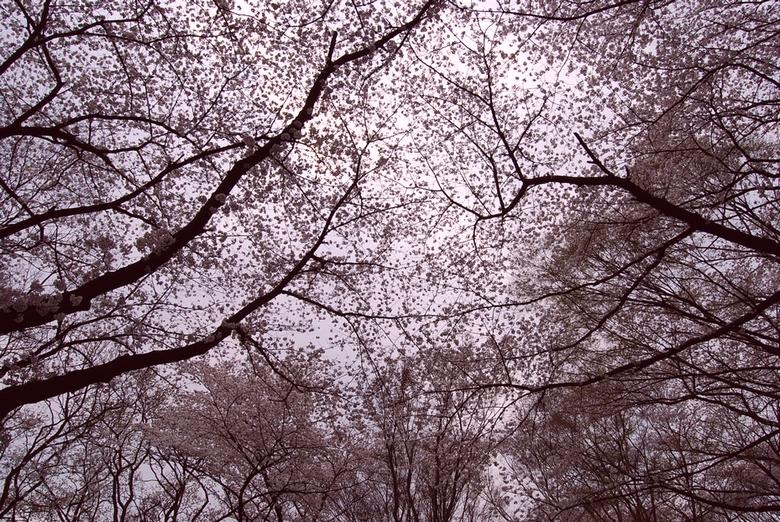 花 嵐の画像