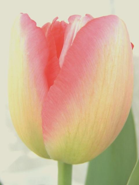 芽 吹の画像