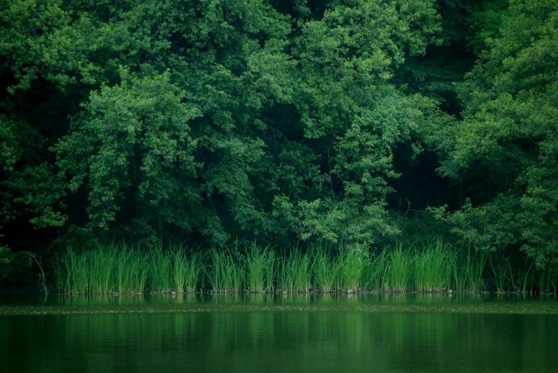 靑 魚の画像