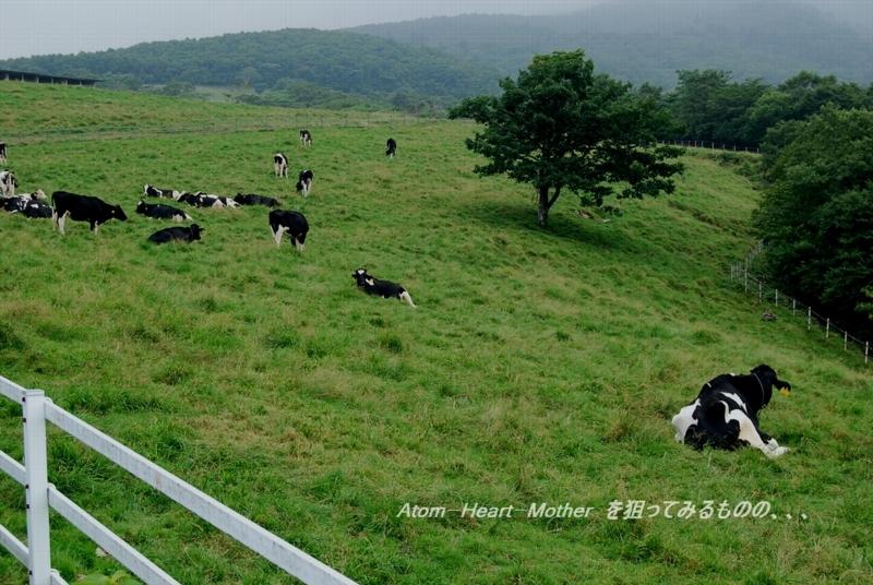 牧 場の画像