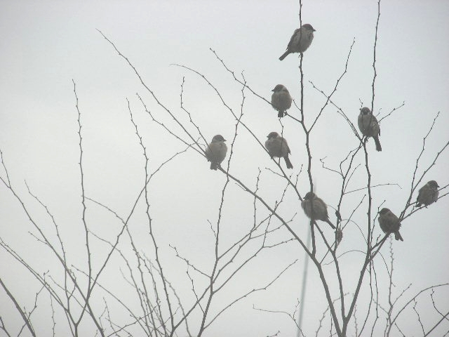 滋 雨の画像