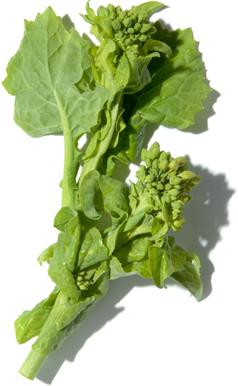 旬 菜の画像
