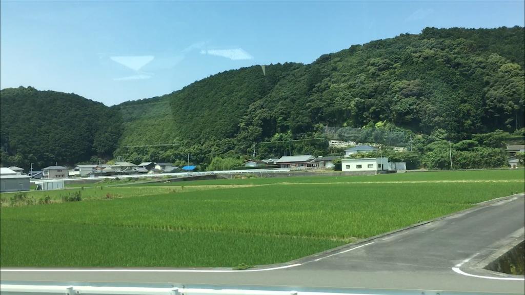 稲穂で田んぼも緑色になっていた。