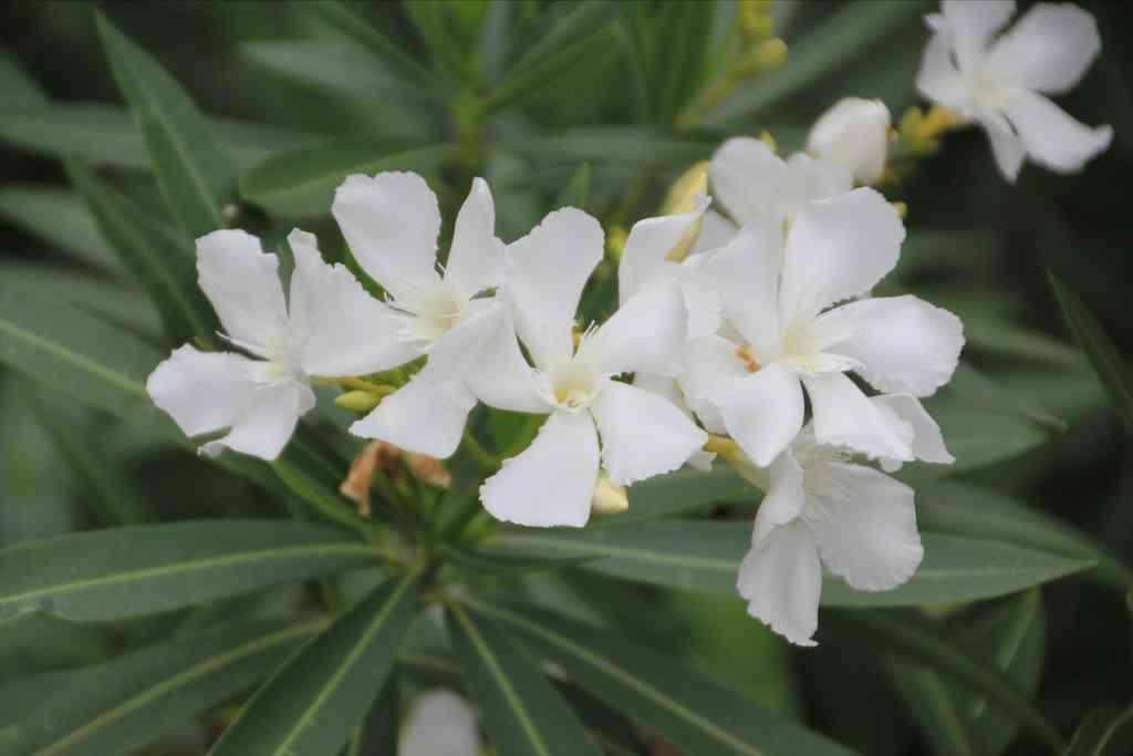 真っ白い花