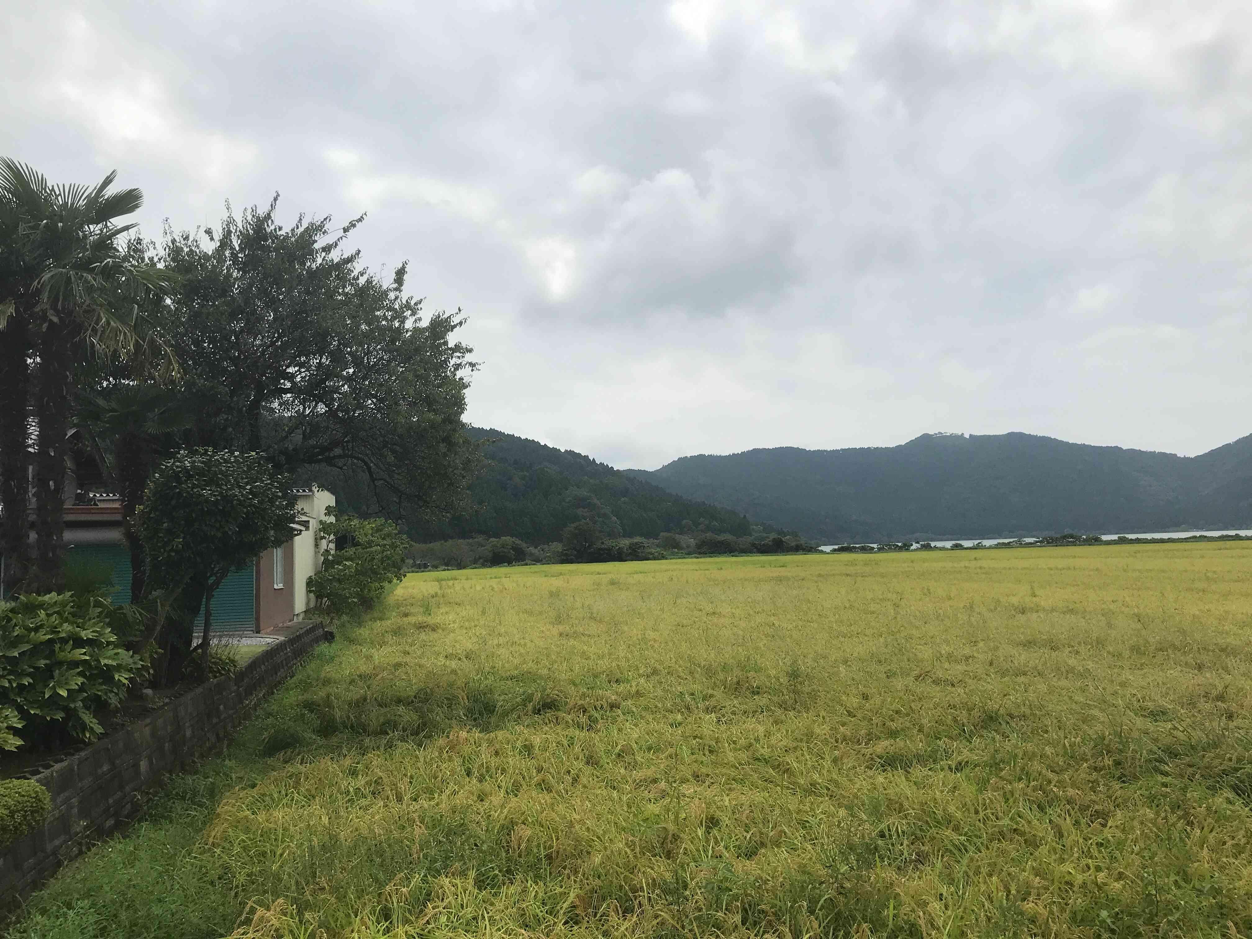 余呉湖と色づいた田の風景