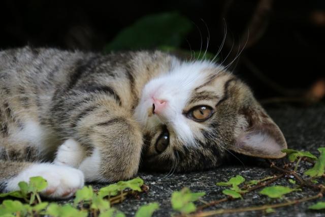 猫 猫の日 ねこ 英語 学習 英単語
