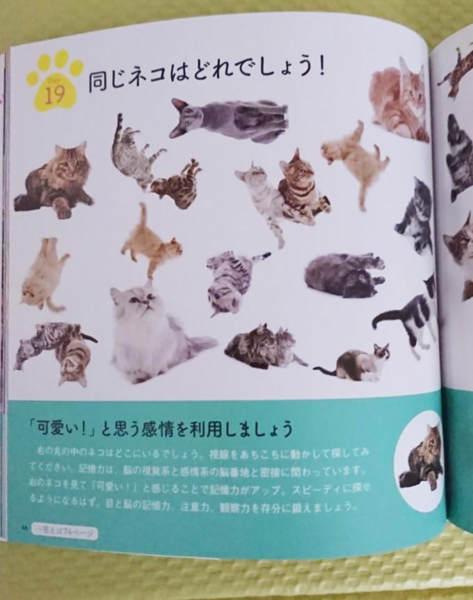 猫好きには溜まらない写真集