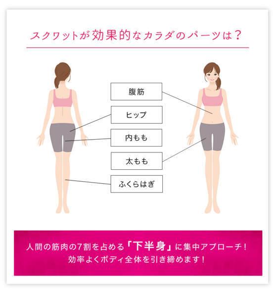 スクワットが効果的な身体の箇所