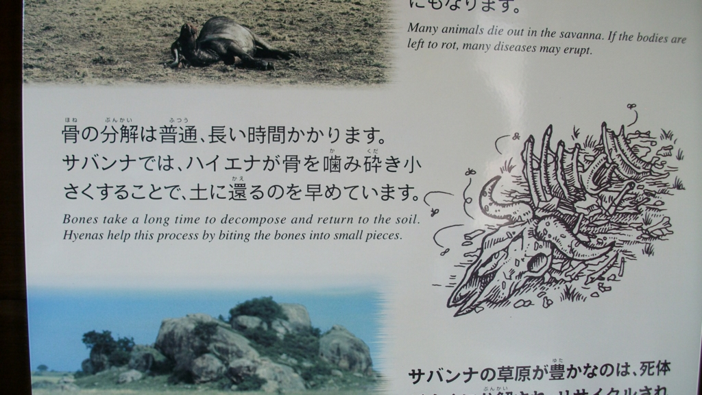 f:id:m_samukawa:20170216231210j:plain