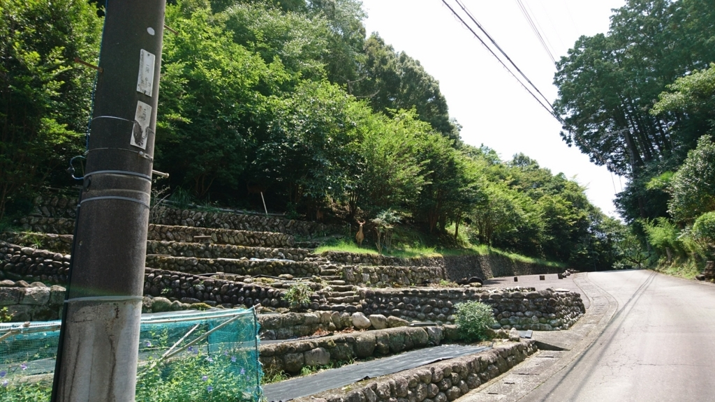 f:id:m_samukawa:20170802234318j:plain