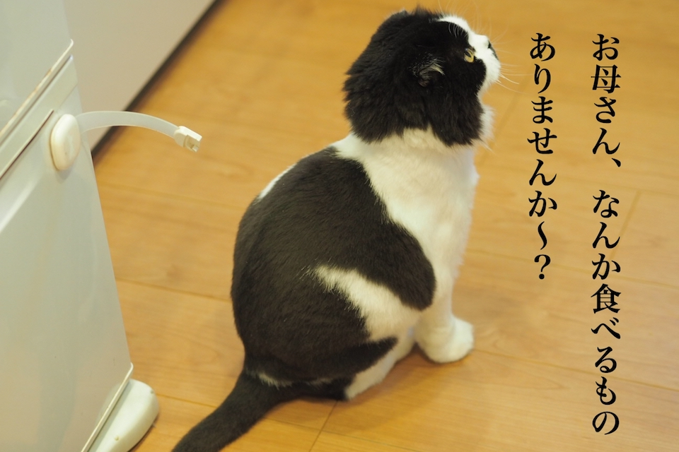 f:id:m_uta:20170821145657j:plain