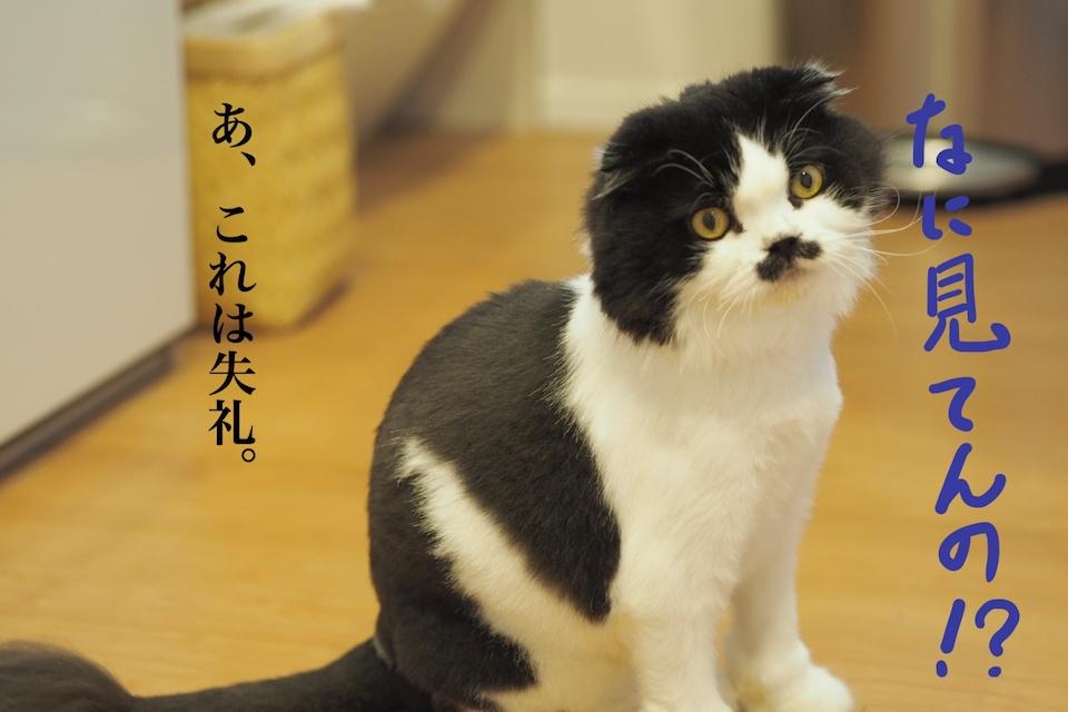 f:id:m_uta:20170821145731j:plain