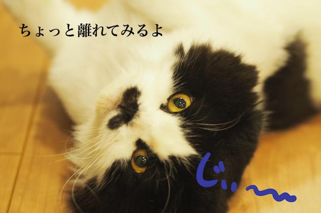 f:id:m_uta:20170827165831p:plain