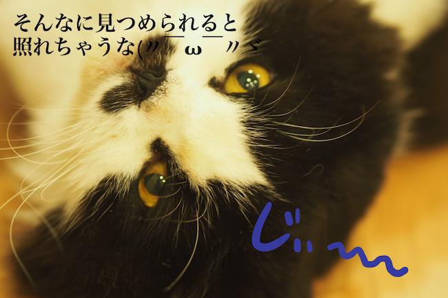 f:id:m_uta:20170827165838p:plain