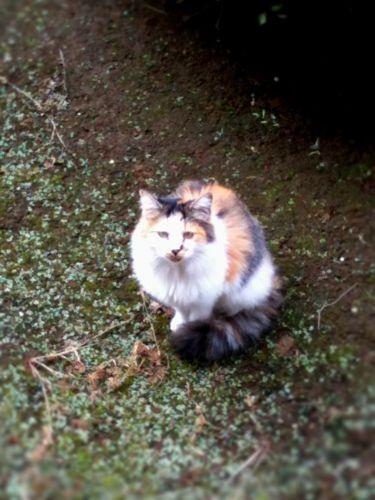 f:id:maacoluke:20111020123711j:image