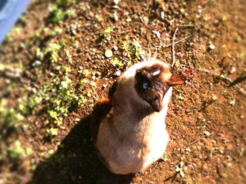 f:id:maacoluke:20111227093747j:image