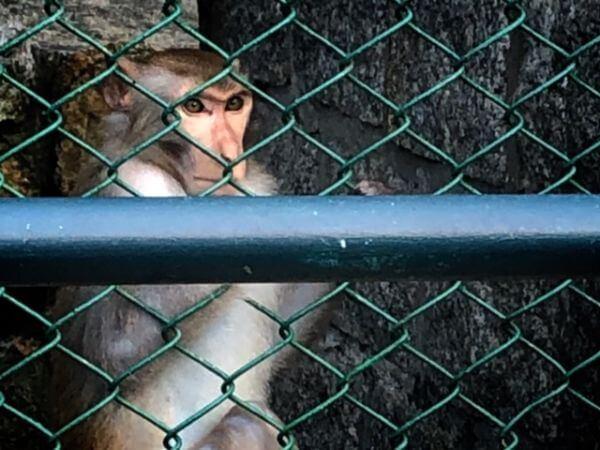 マカオ 公園 動物