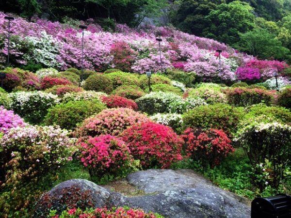 御船山楽園 花まつり アクセス