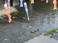 [水路][川][カモ]水が集まるところに、生き物も集まる