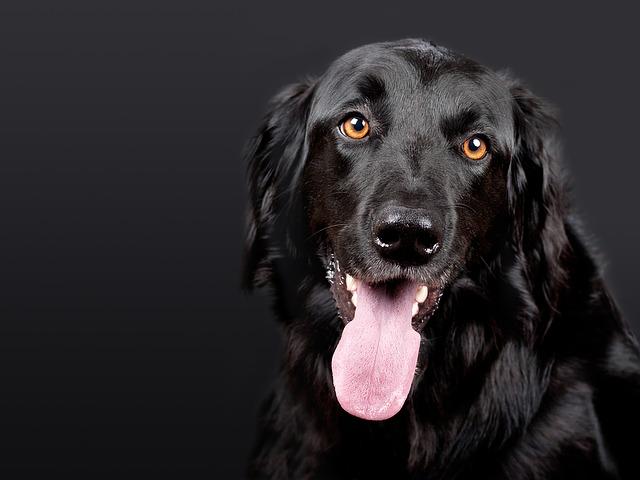 ブラックな職場の犬