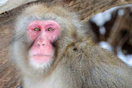介護保険の仕組みを知っている猿