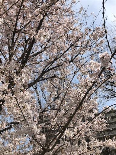 f:id:machicoo_utsuwa:20210327130820j:image