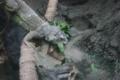 `17.9/13上野zoo