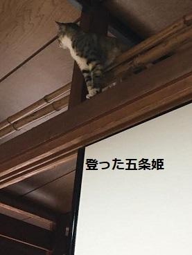 f:id:machiko-e-stainedglass:20210105073432j:plain