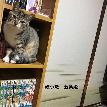 f:id:machiko-e-stainedglass:20210105073447j:plain