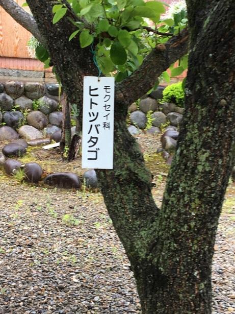 f:id:machiko-e-stainedglass:20210430072230j:plain
