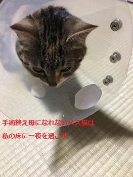 f:id:machiko-e-stainedglass:20210615072935j:plain