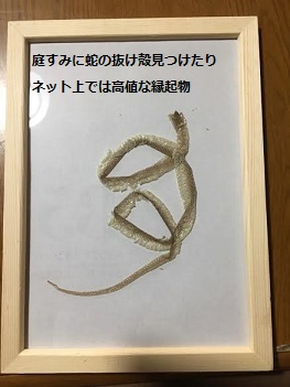 f:id:machiko-e-stainedglass:20210615072947j:plain