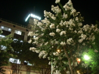 f:id:machiko:20100814214514j:image