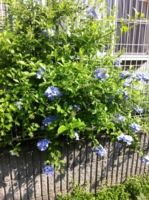 f:id:machiko:20110813084352j:image