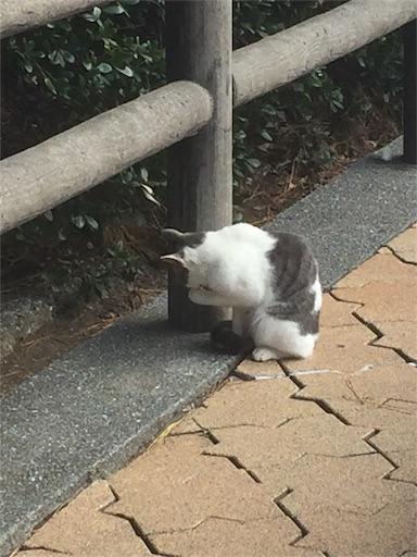 f:id:machiko:20171216193326j:image
