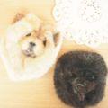 [羊毛フェルトブローチ][うさぎ][ねこ][犬][文鳥][インコ]