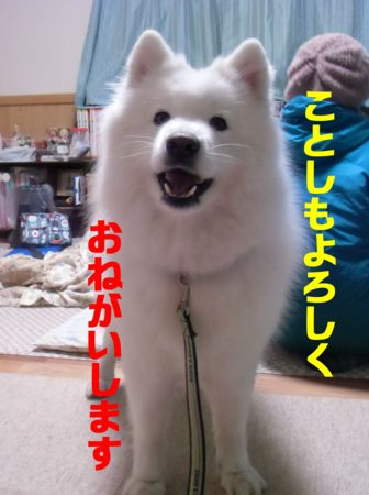 f:id:machisato2:20130105221802j:image