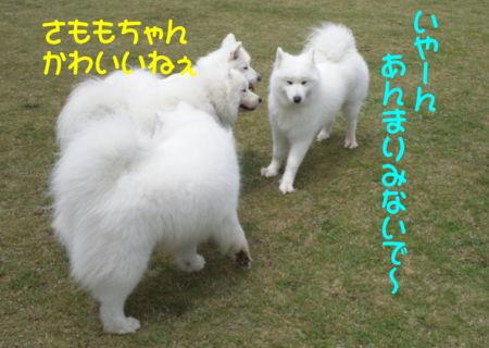 f:id:machisato2:20130518204010j:image