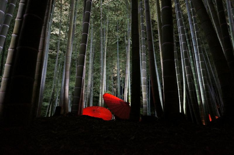 京都新聞写真コンテスト 歴史のさえずり