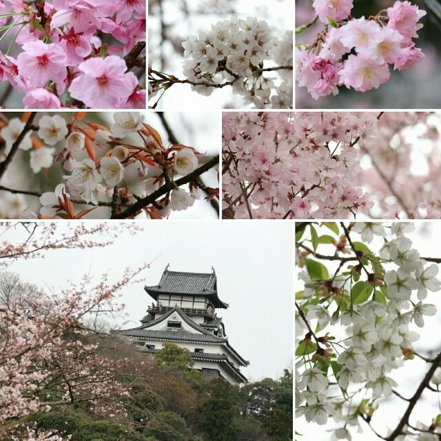 f:id:madatsubomi:20170406203803j:image