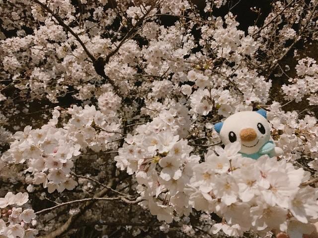 f:id:madatsubomi:20190407221715j:image