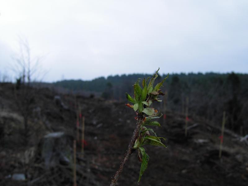 自分たちの手で水源の森林を育てよう!の画像