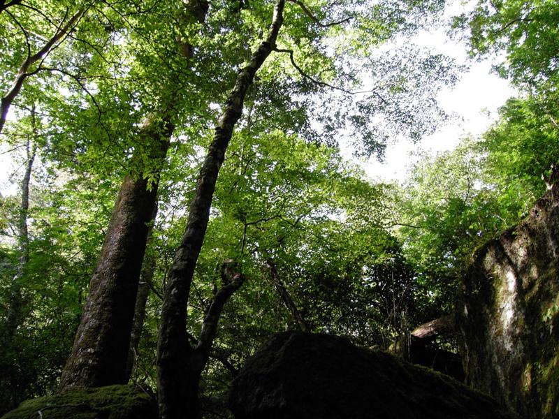 再び、深い森の中への画像